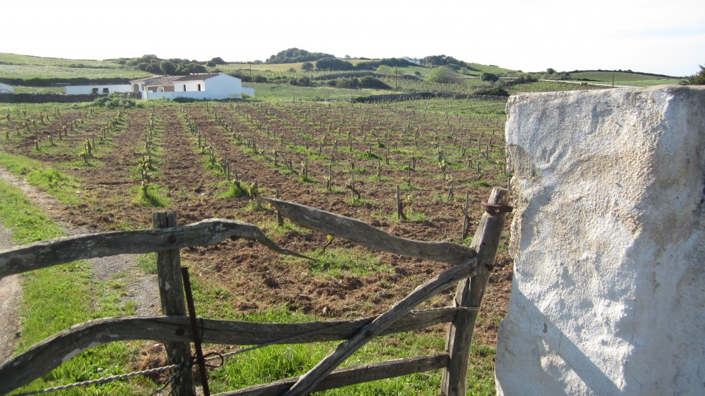 IMG 3131 1024x575 Vino de Menorca